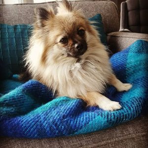 dog-insurance-nc
