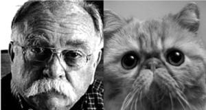 cat-insurance